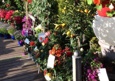 Schneider Soeur votre Jardinerie à Cannes en avril 2019 6