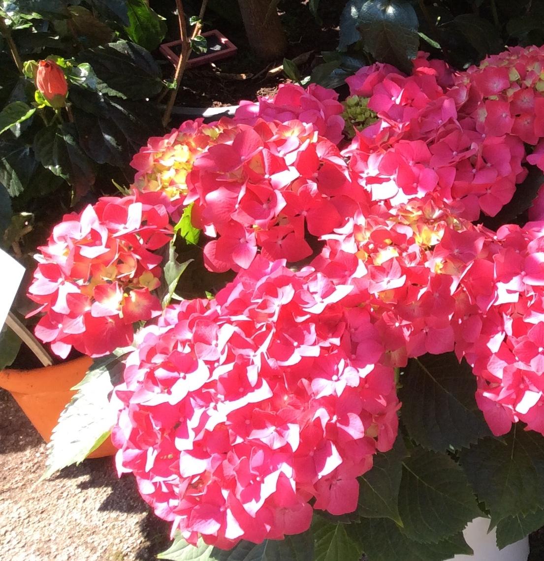 Fleurs cannes livraison