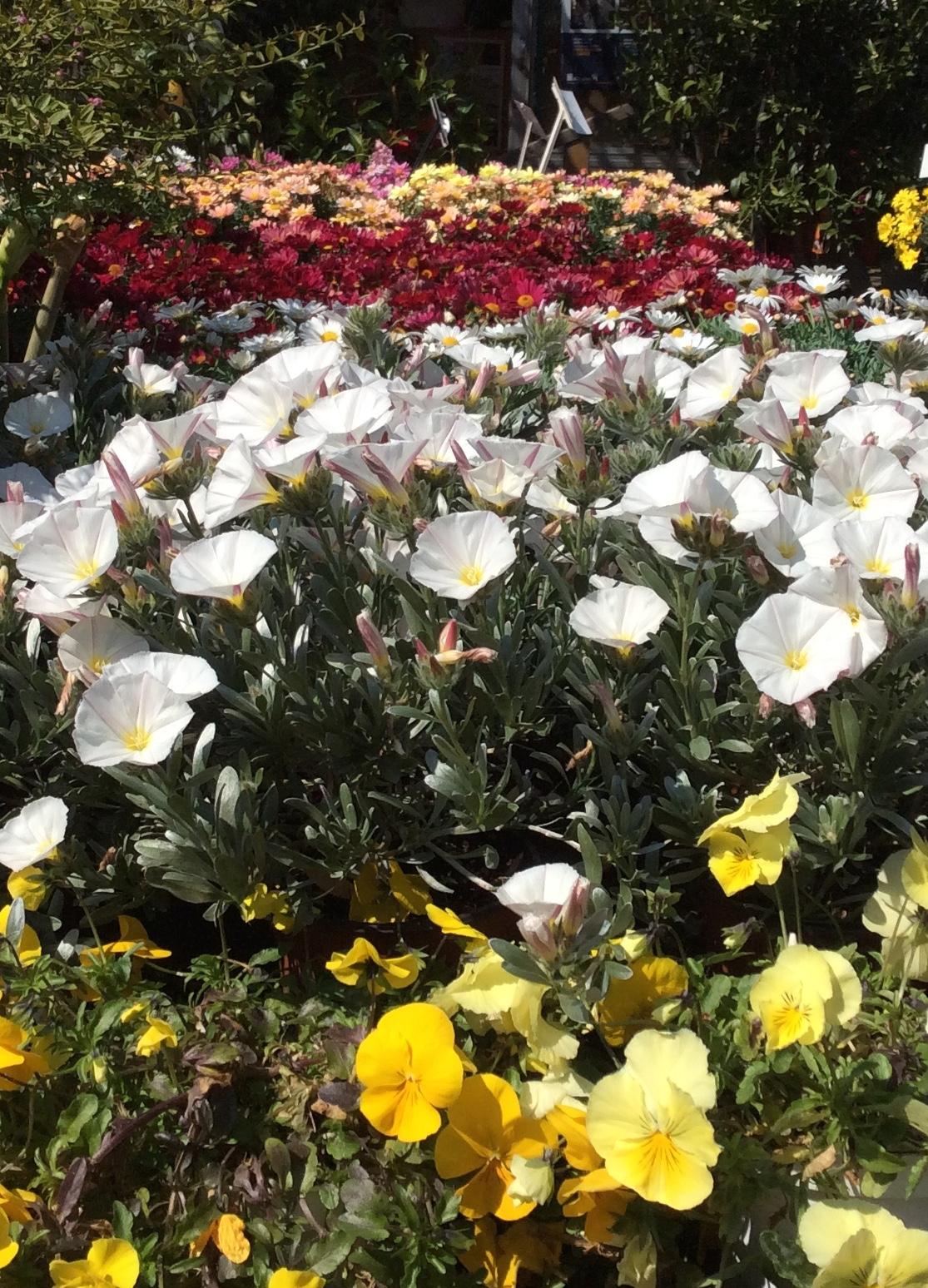 Plantes cannes livraison