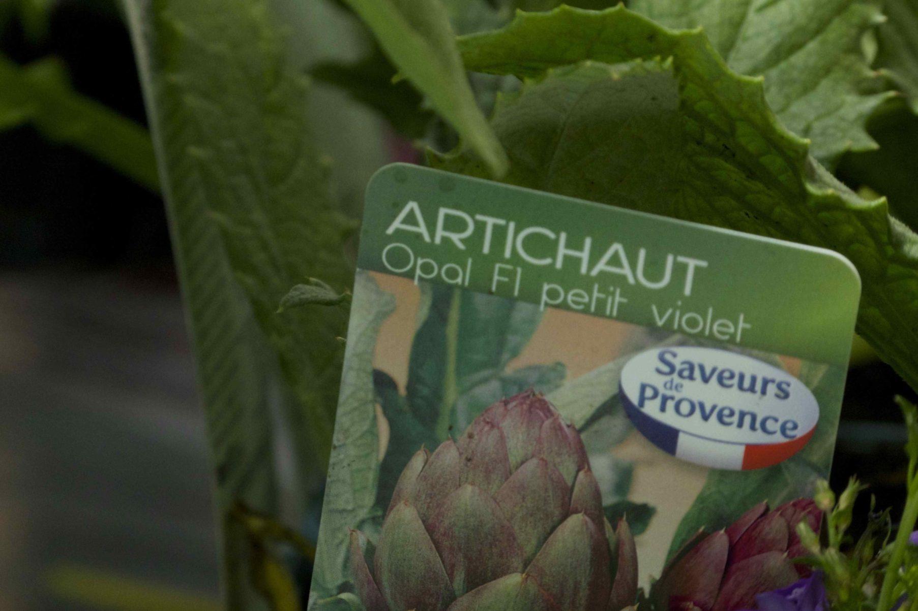 Plant potager jardinerie cannes Schneider