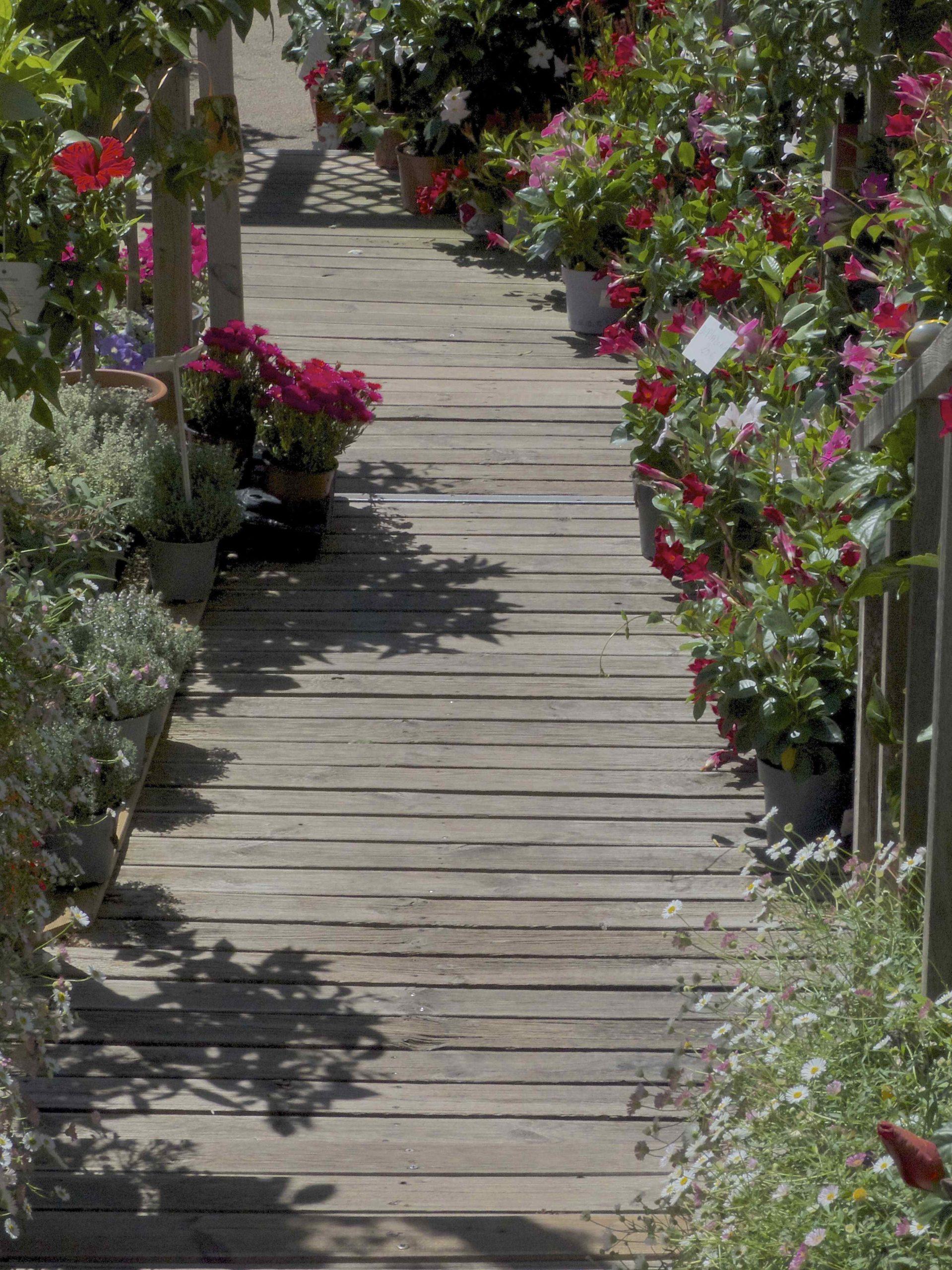 fleurs toussaint cannes jardinerie schneider soeur